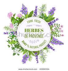 cuisine de provence herbs de provence bunch farm fresh เวกเตอร สต อก 491662504