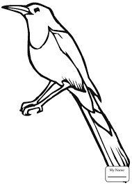 blue jay sunflowers birds coloring pages kids