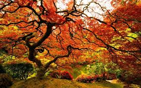 japanese garden top 10 wonderful japanese gardens places to see in your lifetime