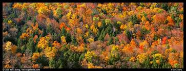 panoramic picture photo trees in multicolored foliage on hillside