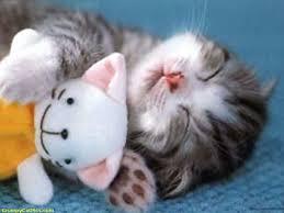 Sleepy Cat Meme - sleepy kitten kitty cat kittens see funny images photos
