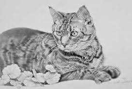 imagenes a lapiz de gatos dibujos de gatitos a lapiz
