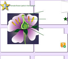 Style Flower Part - lesson objectives teachers u0027 notes 1 review the parts of a flower