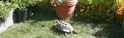 national tortoise day article proper diet for desert tortoises