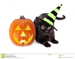 halloween witch pictures halloween witch cat and pumpkin stock photo image 44912969