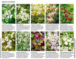 Trellis For Climbers 30 Of The Best Climbing Plants Gardens Illustrated