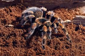 spider symbolism a message spirit animal totems