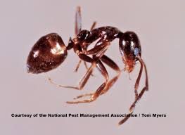 ants facts about ants types of ants pestworldforkids org