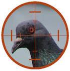 Pigeons Images?q=tbn:ANd9GcRTZT9IMeKkXyo-OLqljAZD6SUWwdvlwnmhc_eNG83b1RsVVyBk3PNscuYh_w