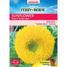 shop flower seeds at lowes com