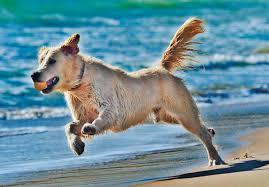 id am agement chambre the canadian veterinary journal la revue vétérinaire canadienne