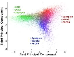 automated analysis of a diverse synapse population