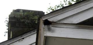 Squirrel In Basement by How To Keep Squirrels From Damaging Your Home Today U0027s Homeowner