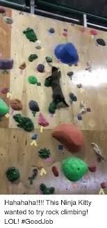 Rock Climbing Memes - 25 best memes about rock climbing rock climbing memes