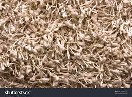 flooring walmart area rugs shag carpet shaggy rugs