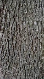 free photo bark tree texture pine free image on