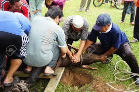 Die K He Malaysia Muslime Feiern Eid Al Adha Zu Schlachten Schafe Kühe