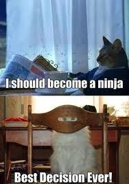 Ninja Meme - cat meme become a ninja