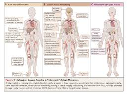 Anatomy And Physiology Of Copd Cppd Im Reference