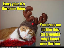Merry Christmas Cat Meme - more pets morepets usa twitter