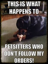 Cat Sitting Meme - 253 best adventures in pet sitting blog and pictures images on