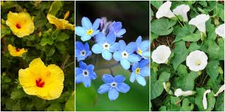 Pretty Plants by 7 Plants That Are Ruining Your Yard Garden Plants That Can Cause