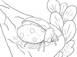 modest coloring pages bugs 17 4627