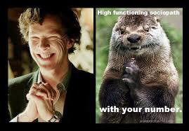 Cumberbatch Otter Meme - benedict cumberbatch sherlock otter memes sherlock pinterest
