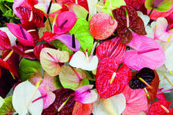ornamental flowers suppliers manufacturers in india