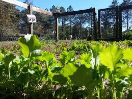 11 tips for the best vegetable garden ever fresh eggs daily
