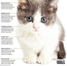Too Cute Meme Face - baby schema effect makes kittens and puppies so cute and adorable