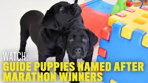 belgian shepherd vs husky the best types of dogs for runners runner u0027s world