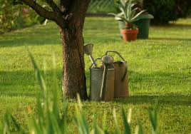 tips for watering your trees in summer best reports