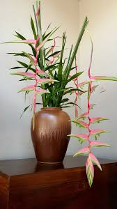 indor plants tall indoor plants that are beautiful and easy to maintain