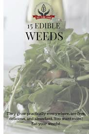 Best 25 Edible Plants Ideas On Pinterest Edible Wild Plants