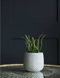 small grey plant pot at rose u0026 grey