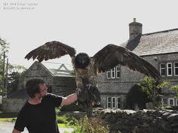 Seeking Vulture Barty The Lammergeier Bearded Vulture