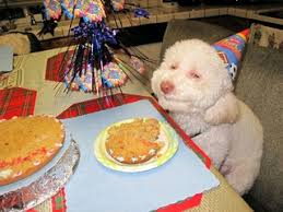 birthday cakes for dogs career advice from the and dogs that look high culturemap