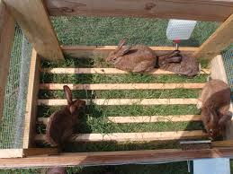 Rabbit Hutch Plans For Meat Rabbits Pastured Rabbit Good Life Ranch