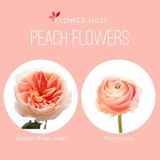 Peach Flowers Flower Muse Blog Blog Become Inspired