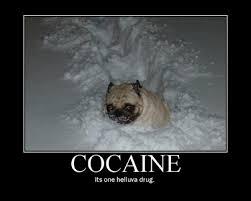So Much Cocaine Meme - mmm cocaine meme by cordog7 memedroid
