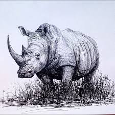 drawn rhino pencil drawing pencil and in color drawn rhino