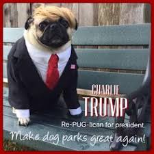 Funny Pug Memes - funny pug dog meme pun lol cute pinterest funny golden