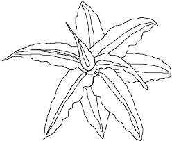 maja u0027s rainforest coloring book 2