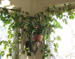 best house plants lighting indoor plant lights beautiful indoor light for plants