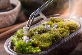 terrarium a hand with a tweezer making of bottle terrarium plant
