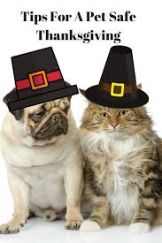 pet safe thanksgiving dinner what to serve or not serve at the