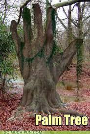 Tree Puns Palm Tree Puns Pun Pictures