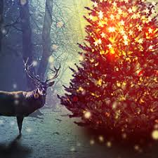 magic christmas tree photoshop manipulation tutorial photoshop