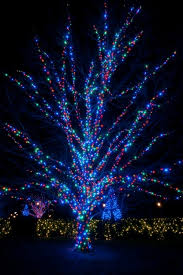 How To Decorate Outdoor Trees With Lights - how to wrap lights around trees hometalk